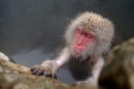 ◆再投稿【1/10(日) 入浴習慣と免疫力】