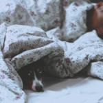 ◆【1/22(金) 免疫にもやっぱり睡眠だった】