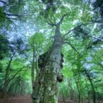 ◆【9/3(金) 文明化は自然への渇望感を生み出す】